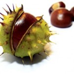 OUCH! Conkers